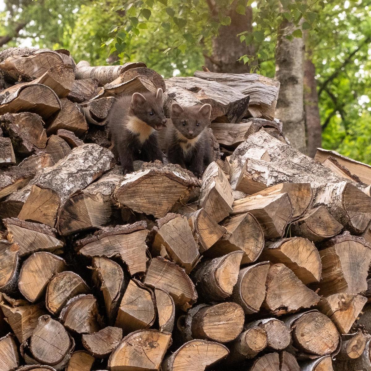 boommarter nest