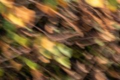 Berkenblaadjes in najaarszon (bewogen opname)