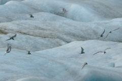 Noordse sterns boven ijsmeer