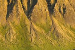 Groene deltas