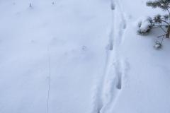 Reesporen in dikke sneeuw