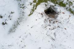 Vogelsporen