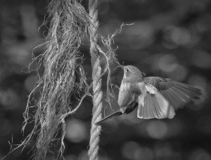 Vliegenvanger